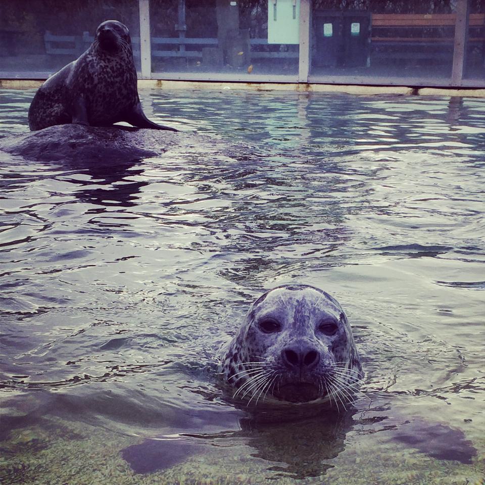 Reykjavík Zoo and Family Park