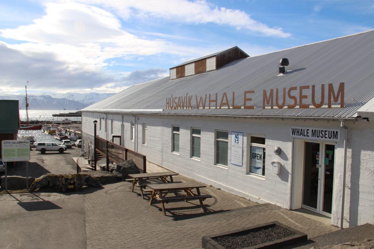 The Húsavík Whale Museum