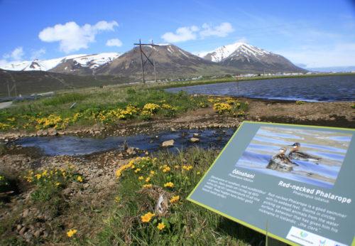 Friðland fuglanna, Húsabakka, Svarfaðardal